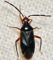 Ceratocapsus nigellus