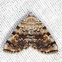 American Idia Moth - Hodges #8322 - Idia americalis