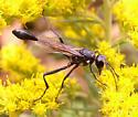 Wasp. Eremnophila? - Eremnophila aureonotata