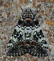 Catocala connubialis – Connubial Underwing Moth  - Catocala connubialis