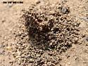 termite monolith - Reticulitermes