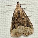 Black-spotted Schrankia Moth - Hodges #8431 - Schrankia macula