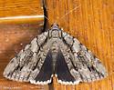 Catocala vidua - Catocala retecta-luctuosa