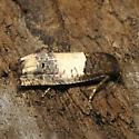 Goldenrod Gall Moth - Hodges #3186 - Epiblema scudderiana
