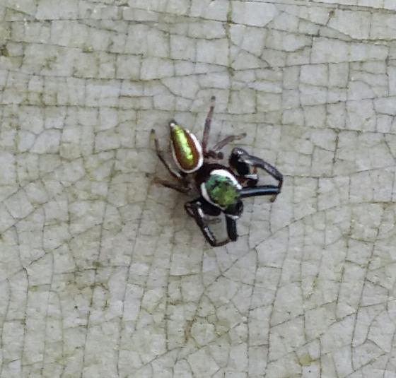 Messua Limbata green jumper  - Messua limbata