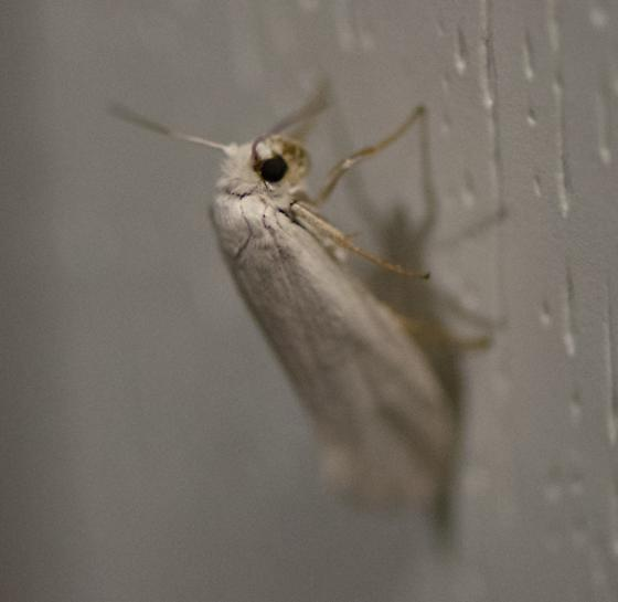 Moth type