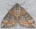 Moth - Dysstroma