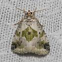 Black-dotted Maliattha - Hodges#9049 - Maliattha synochitis