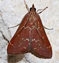 Pyrausta atropurpuralis