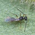 Tiny Wasp ?