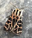 Possible Tiger Moth? - Grammia ornata