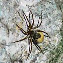 Need Spider ID Please
