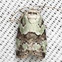 Dyar's Lichen Moth - Hodges #8102 - Afrida ydatodes