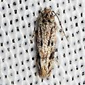 moth - Ymeldia janae