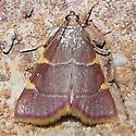 Four Spot 2 - Hypsopygia olinalis