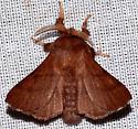 Forest Tent Caterpillar Moth?? - Malacosoma disstria - male