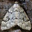 Geometridae - pale, large speckels  - Nepytia janetae