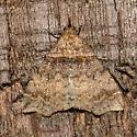 Lascoria ambigualis - Ambiguous Moth - Lascoria ambigualis