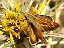 Woodland Skipper - Ochlodes sylvanoides - female
