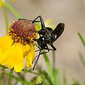 sphecid wasp? - Sphex lucae - male