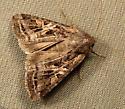 724 Trichordestra lilacina - Aster Cutworm 10308 - Trichordestra lilacina