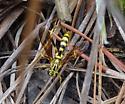 Wasp - Banchus