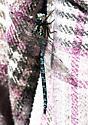 dragonfly - unident - Aeshna clepsydra