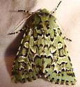 green moth - Feralia deceptiva