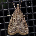 Double-striped Scoparia - Hodges#4716 - Scoparia basalis