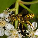 Wasp? - Nomada - female