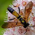 Waspy Fly