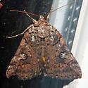 Similar Underwing - Hodges#8873 - Catocala similis