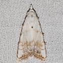 8991 – Sorghum Webworm Moth - Nola cereella