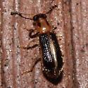 Beetle 1905.06.07.2014 - Cregya oculata