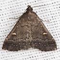 Smoky Tetanolita Moth - Hodges #8366 - Tetanolita mynesalis - female