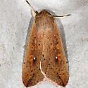 Armyworm - Hodges#10438 - Mythimna unipuncta