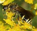Wasp Aug 29