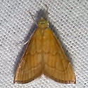 Which Moth? - Aethiophysa invisalis