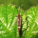 There's that moth again - Esperia sulphurella