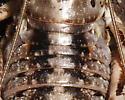 Cyphoderris monstrosa - Cyphoderris