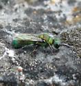 Hymenoptera 7-13-11 05b