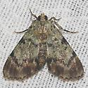 Dimorphic Macalla Moth - Hodges#5577 - Epipaschia superatalis