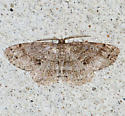 another brown moth - Melanolophia canadaria