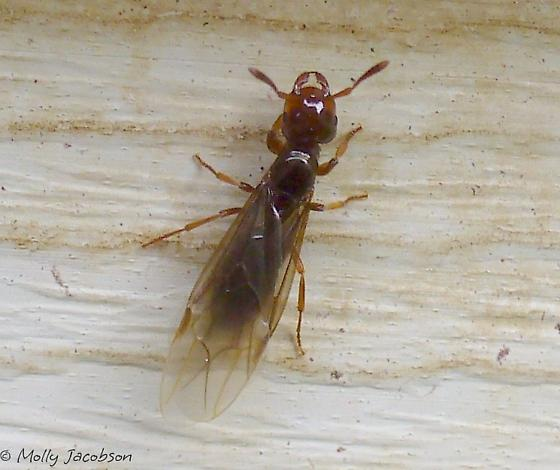 planet of the ants part 2 - Lasius claviger