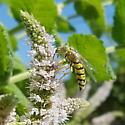 Is This a Cuckoo Bee?