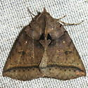 Black Bit Moth - Hodges #8747 - Celiptera frustulum