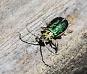 Unidentified beetle? - Trirhabda flavolimbata