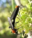Lovin' - Plecia - male - female