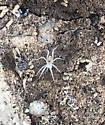 Spider or mite
