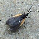 Small Black and Orange Moth? on Beach - Pyromorpha dimidiata